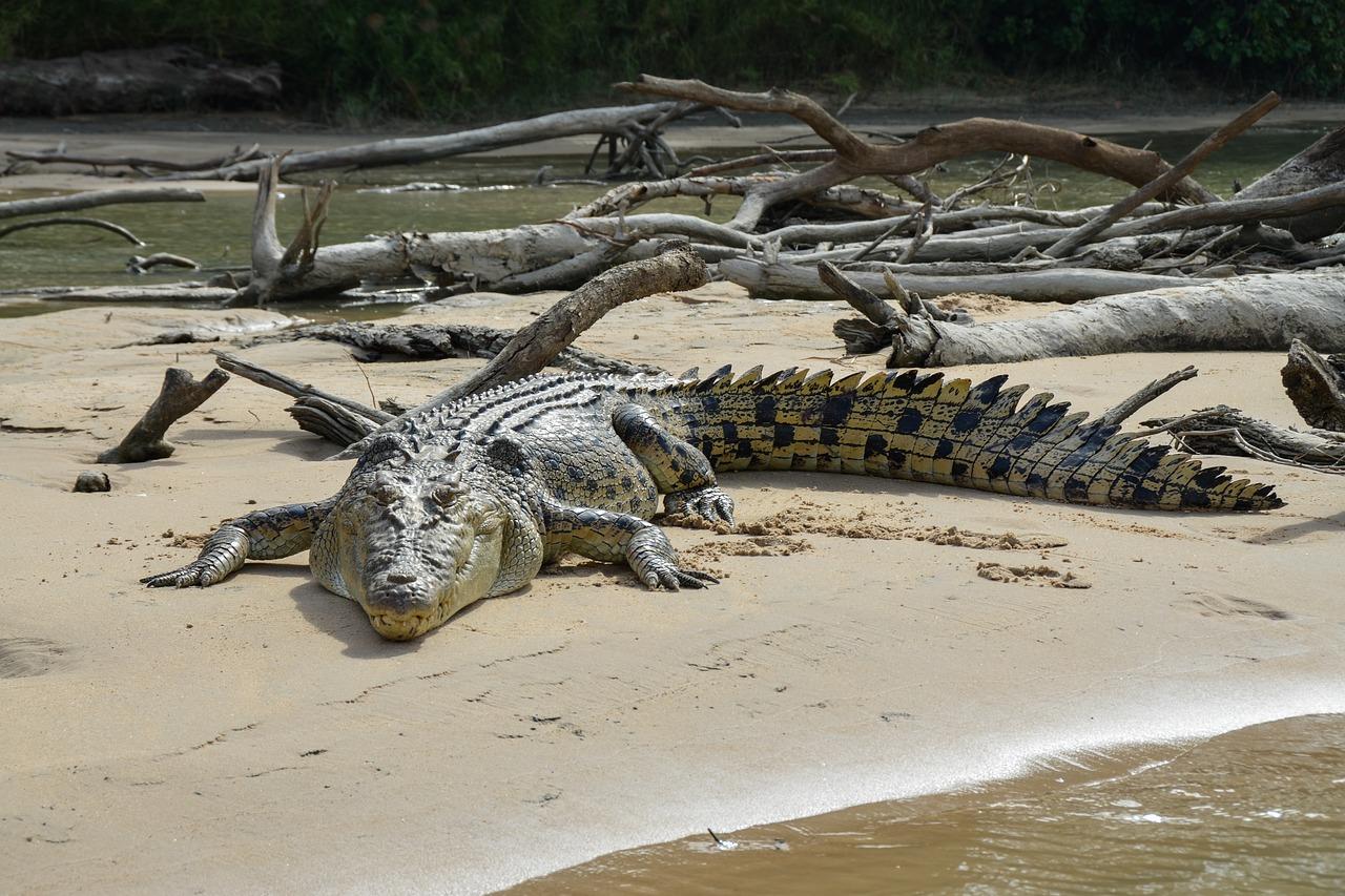 Крокодилы — виды и названия