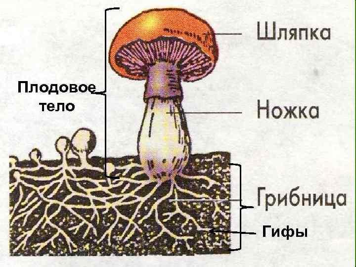 Gif — википедия с видео // wiki 2