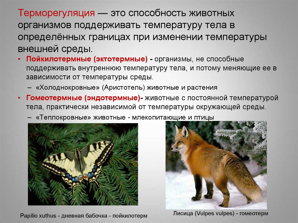 § 6. температура как экологический фактор. пойкилотермные и гомойотермные организмы