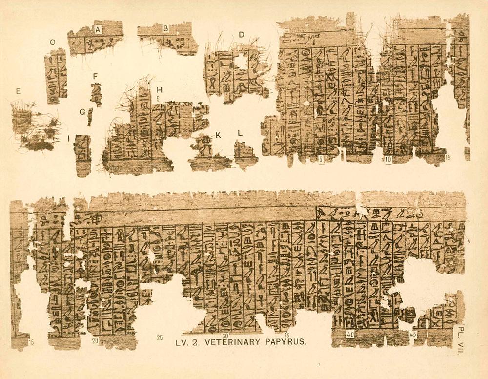 Что такое папирус для древнего мира