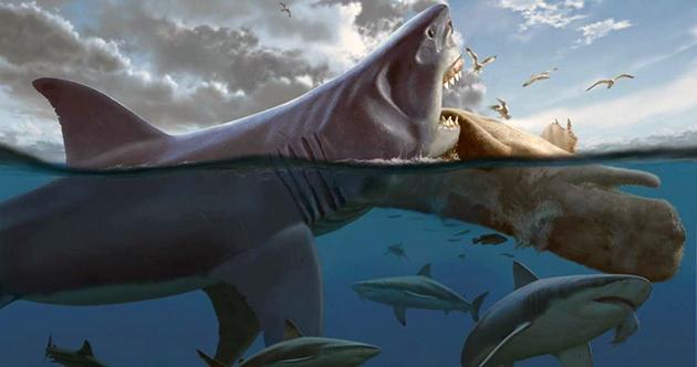 Гигантская акула мегалодон жива? ∞ лагуна акул