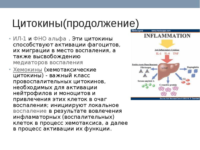 Covid-19: астаксантин помогает смягчить цитокиновый шторм