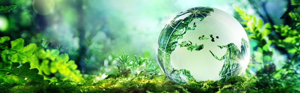 Чем природа отличается от окружающей среды и как не перепутать ее с биосферой?
