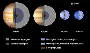 Что такое ядро в биологии? строение и функции ядра