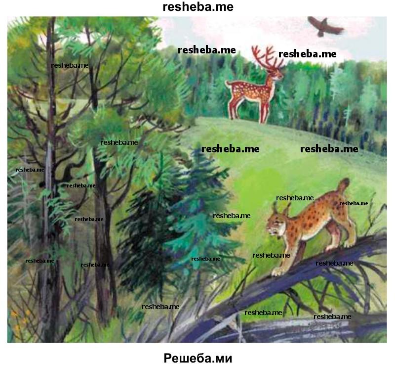 Что такое тайга? хвойные леса тайги: описание, растительный и животный мир : labuda.blog что такое тайга? хвойные леса тайги: описание, растительный и животный мир — «лабуда» информационно-развлекательный интернет журнал