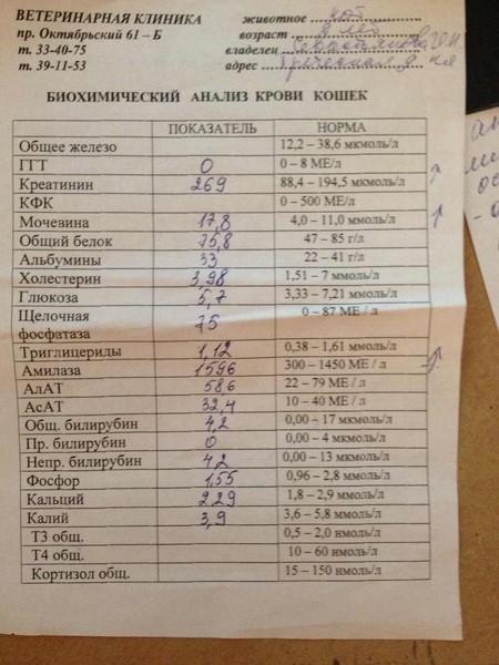 Норма алт и аст в крови: таблица по возрасту