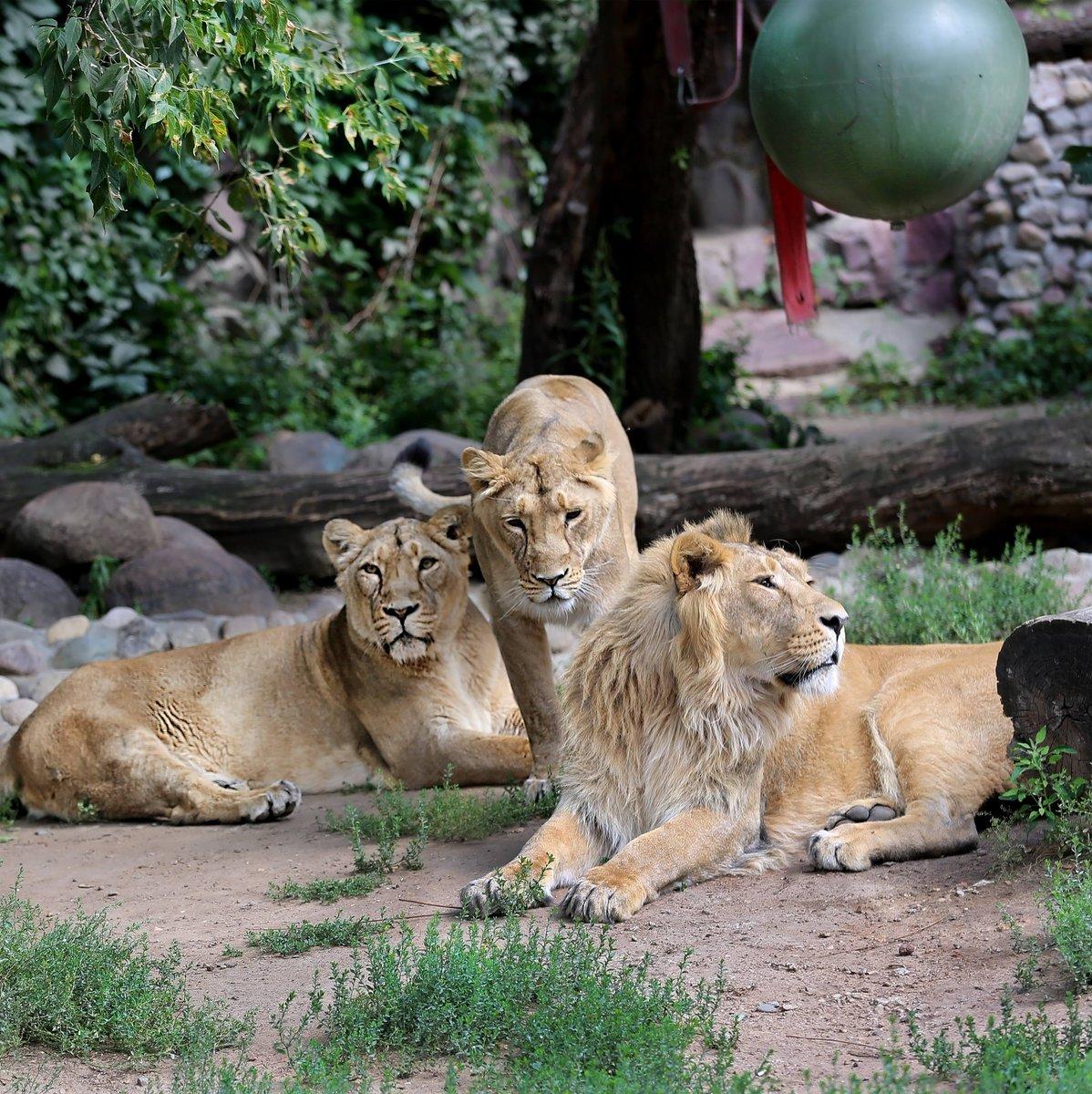 Московский зоопарк - лекторий и экскурсии, стоимость входа, время работы, животные
