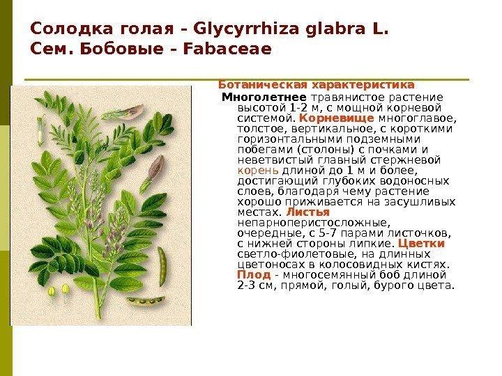 Сапонины - что это такое? характеристика, описание. какие побочные эффекты дают сапонины – риски использования стероидные гликозиды растений