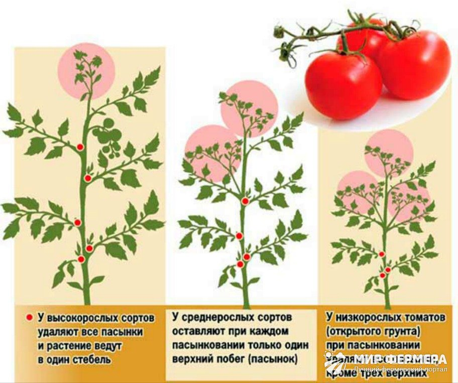 Вся правда о пасынковании и прищипывании помидоров | на грядке (огород.ru)