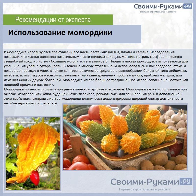 Момордика — выращивание и лечебные свойства. фото — ботаничка.ru