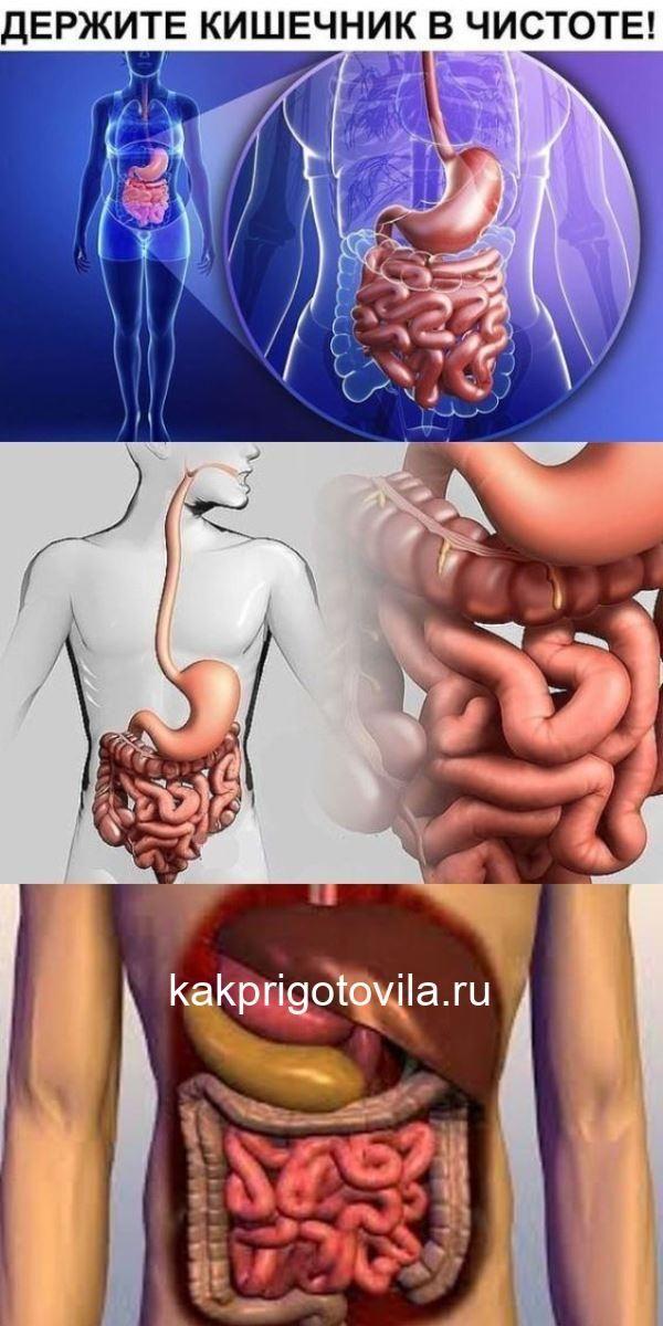 Список заболеваний кишечника, их симптомы и признаки, причины возникновения и способы лечения