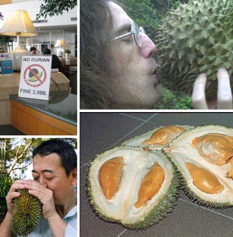 Что такое дуриан — описание внешнего вида фрукта, его запаха и полезных свойств