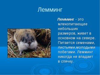 Лемминг (фото): дикое животное грызун-отшельник