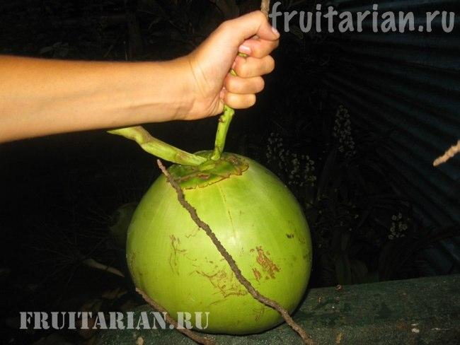 Что такое кокос