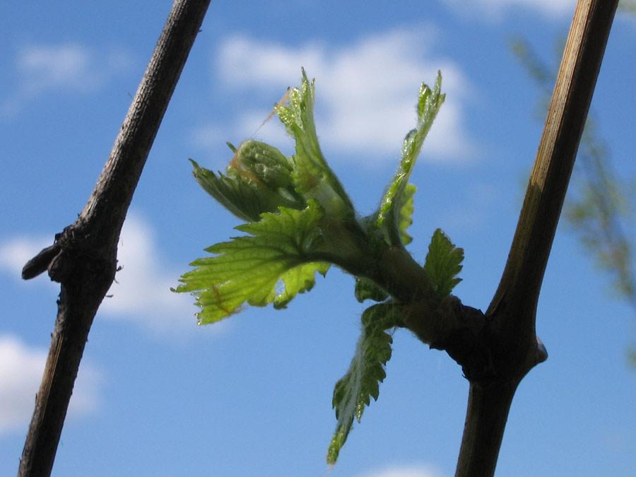 Период вегетации у растений. что это такое?.