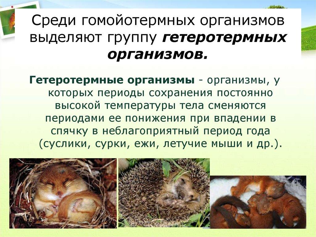 Пойкилотермные организмы
