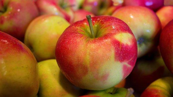 Яблоко (29 фото): это фрукт или ягода, что это такое и применение плодов