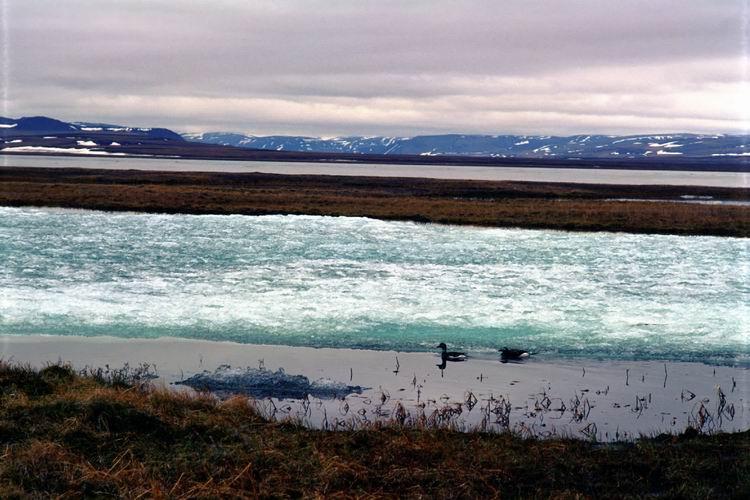 Что такое природная среда? виды и характеристики природной среды