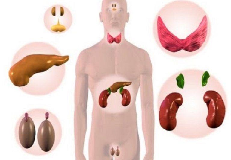Гормон эстроген: как повысить и за что он отвечает, симптомы его нехватки или избытка у женщин при климаксе и лечение этого