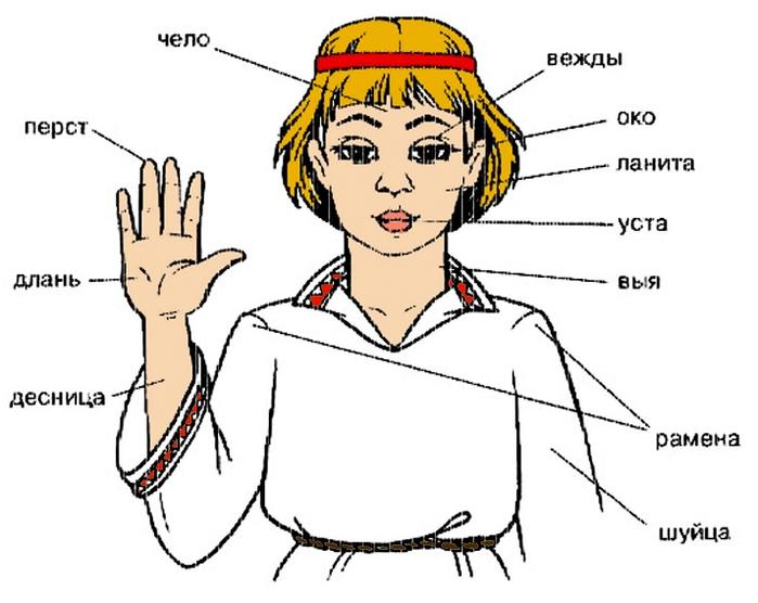 Голова (значения) — википедия. что такое голова (значения)