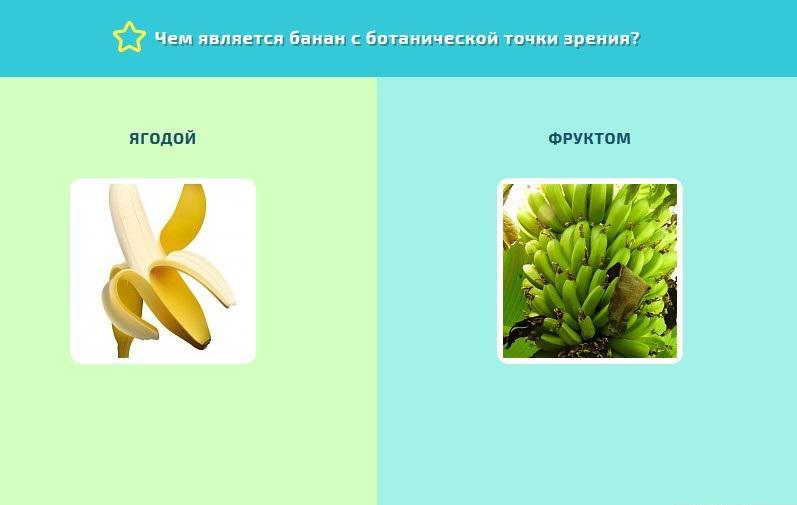 Банан – это фрукт, ягода или овощ?
