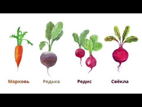 Зри в корень: путеводитель по корнеплодам