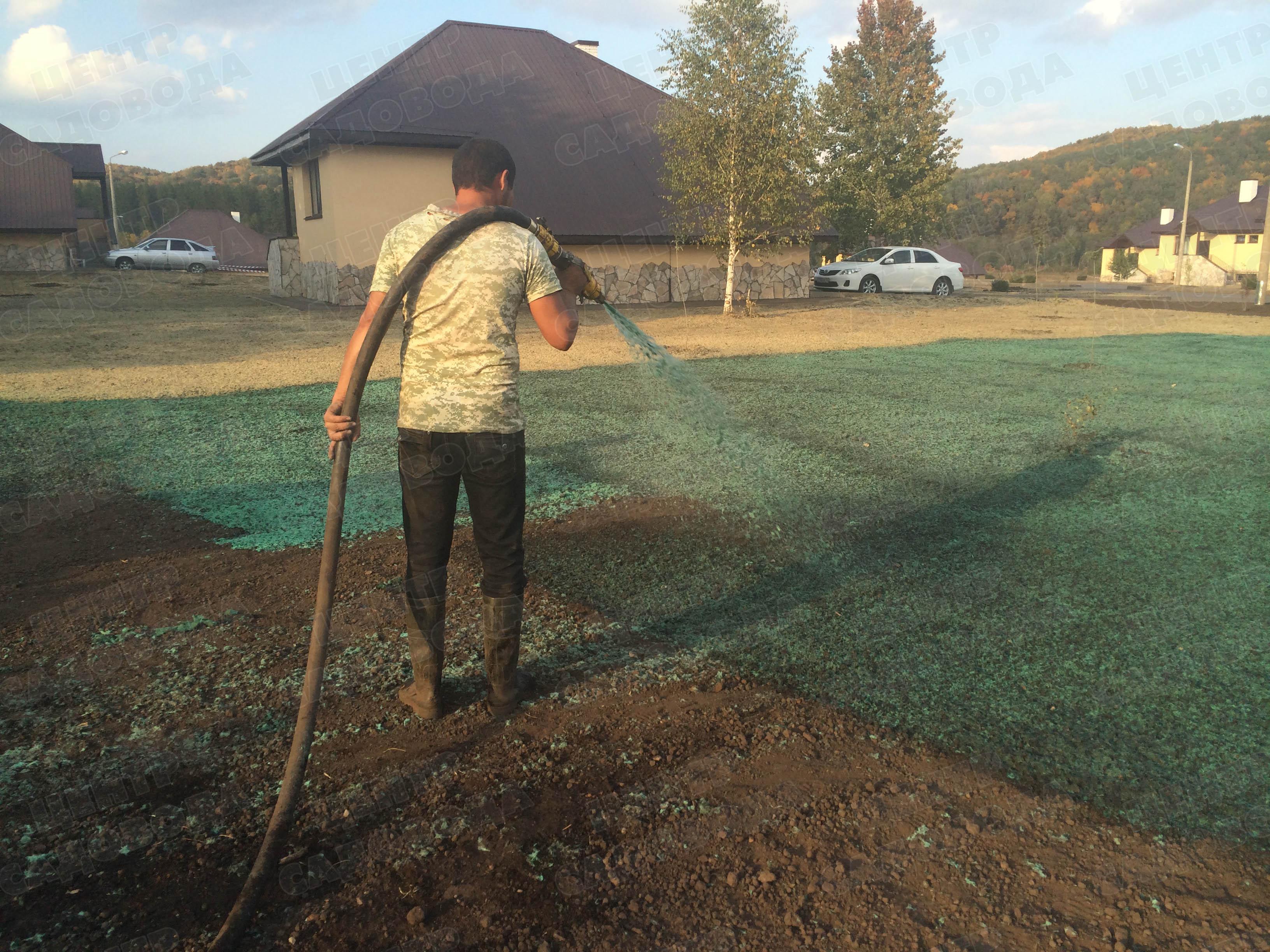 Жидкий газон (64 фото): что такое гидропосев газонной травы своими руками, состав наливного газона, как им пользоваться, пошаговая инструкция, отзывы