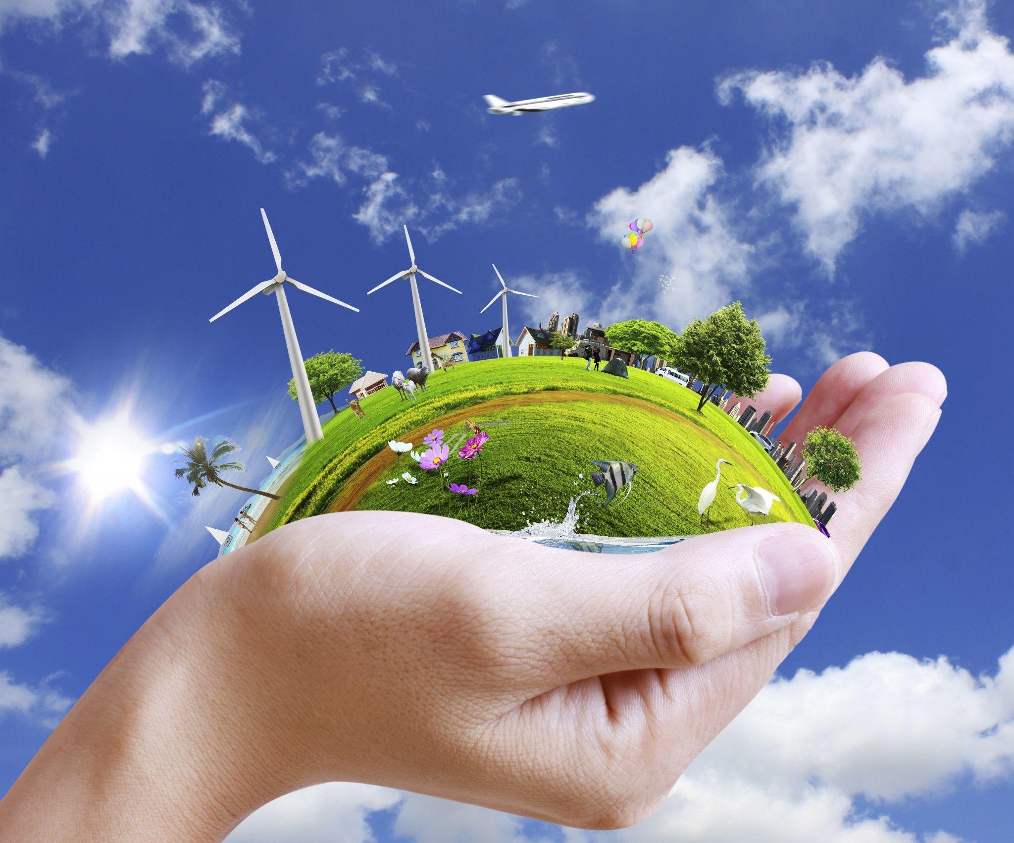 Экология — определение, понятия и виды