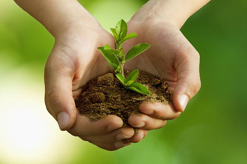 Что такое экология – значение, определение и виды