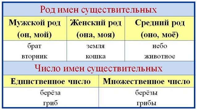 Род имен существительных: мужской, женский, средний и общий