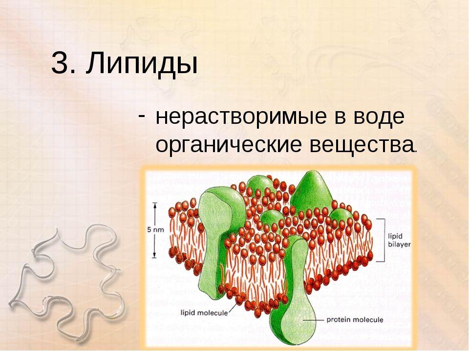 Липиды – классификация, строение и свойства в мембранах клеток