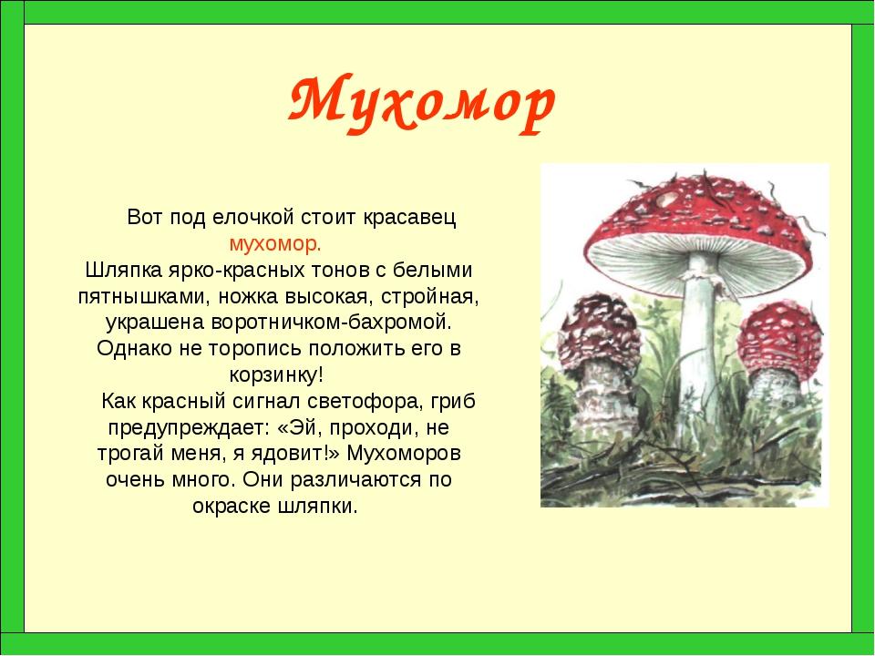 Гриб — википедия с видео // wiki 2