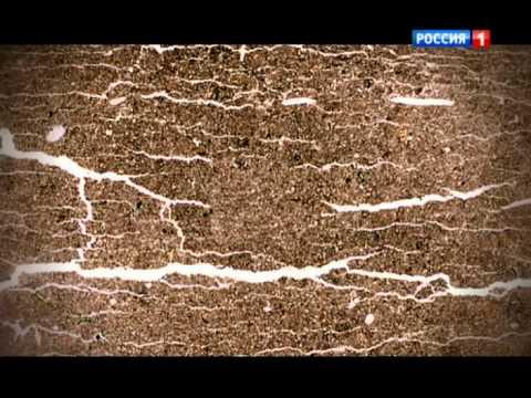 Чернозем: что это такое, его состав, свойства, как он выглядит и как формируется
