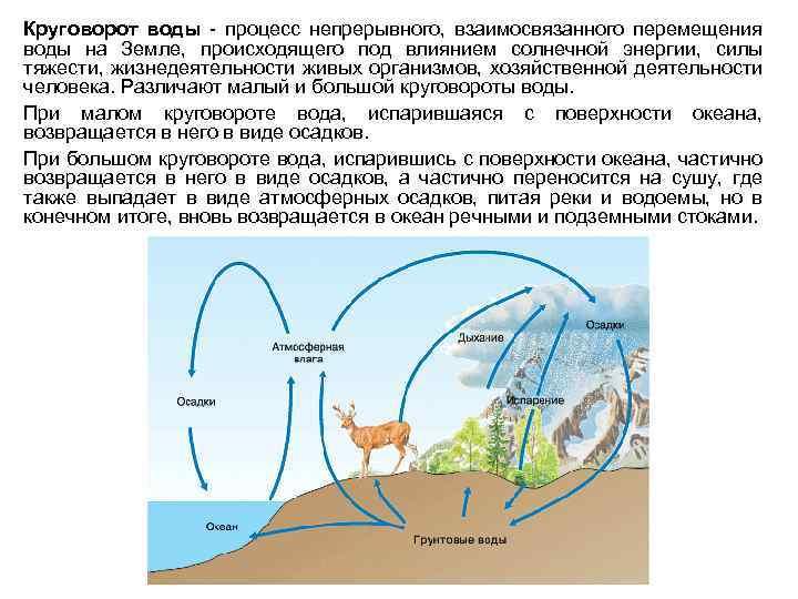 Что такое биологический круговорот веществ? - other