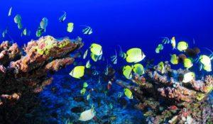 Коралловые рифы: виды, роль, экологические проблемы и защита