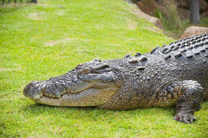 Этот опасный наркотик «крокодил». дезоморфин - или город живых мертвецов.