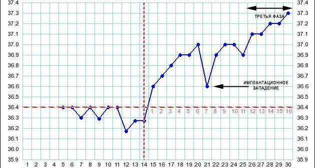 Измерение базальной температуры (бт). правила. расшифровка графиков базальной температуры - симптомы и лечение. журнал медикал