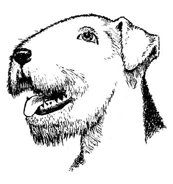 """Копрофагия. что такое копрофагия? способ питания """"копрофагия"""" - что это такое"""