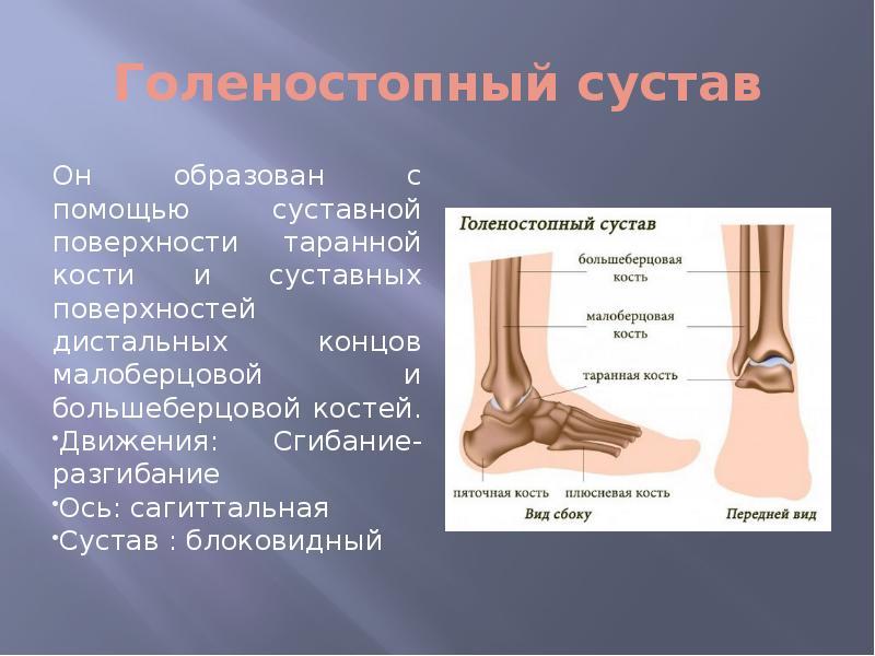 Латеральная (медиальная) лодыжка: расположение, переломы и растяжения