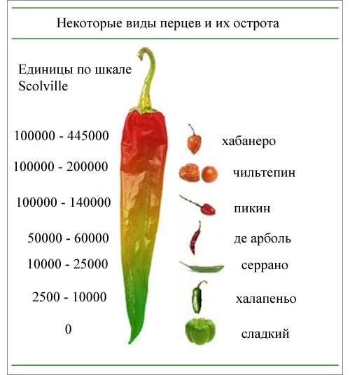 Чем полезен для здоровья кайенский перец и как его правильно выращивать