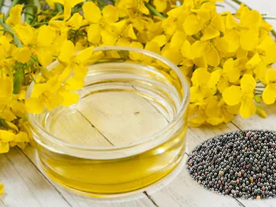 Рапсовое масло | в чем польза и вред масла для организма