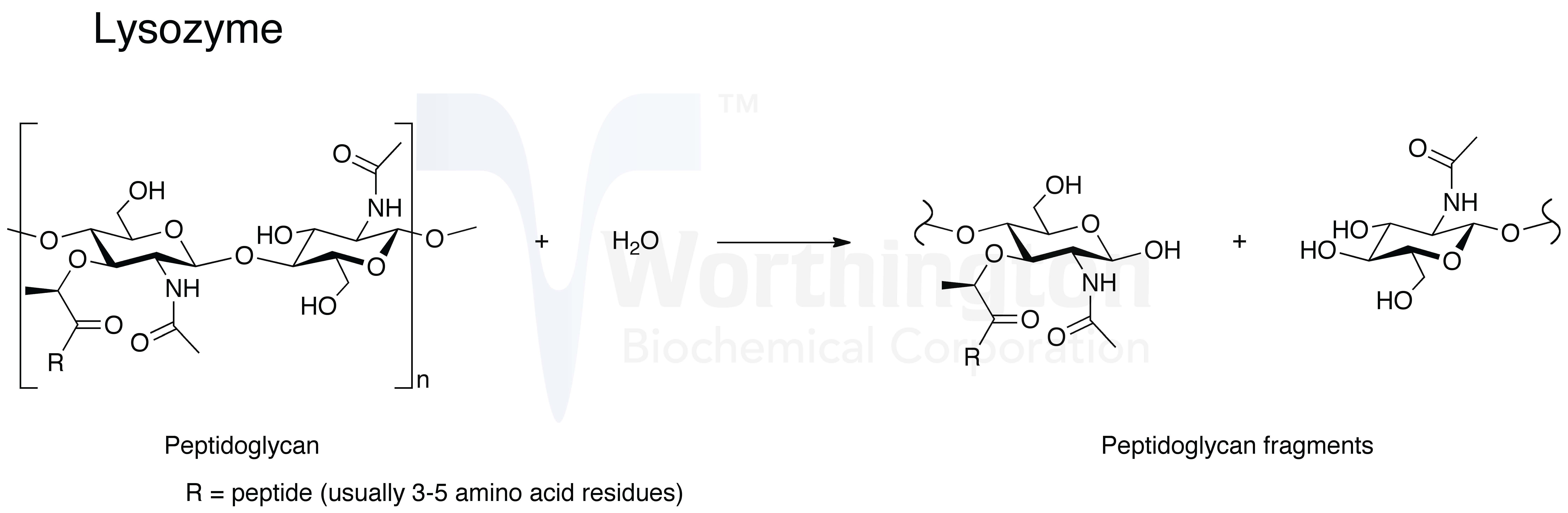 Е1105, лизоцим – консервант, вред, отзывы, применение, что это, состав, влияние на организм, пищевая добавка
