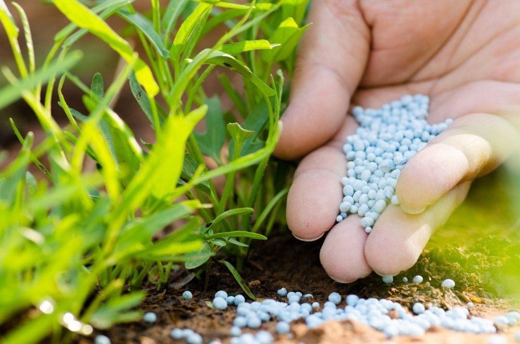 Основные правила внесения минеральных удобрений | дела огородные (огород.ru)