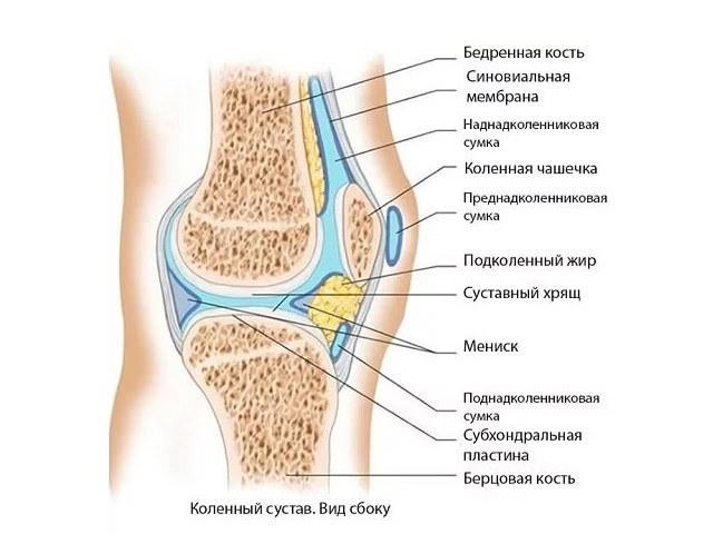 Синовиальная жидкость: что это такое и как ее восстановить | все о суставах и связках