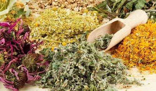 Трава ягель – лекарственные свойства, как пить настойку из ягеля