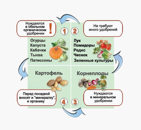 Все секреты севооборота   дела огородные (огород.ru)