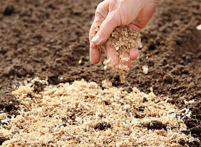 Топ-20 видов мульчирования почвы: плюсы & минусы
