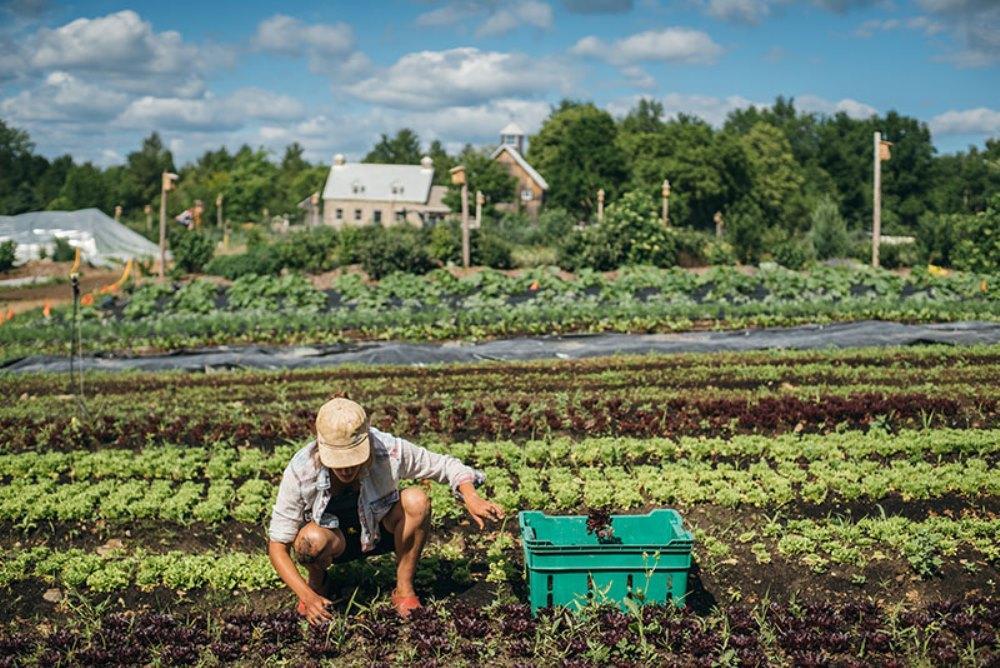 Что такое точное земледелие