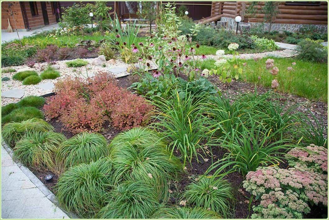 Осока: фото и описание растения, выращивание в открытом грунте, виды