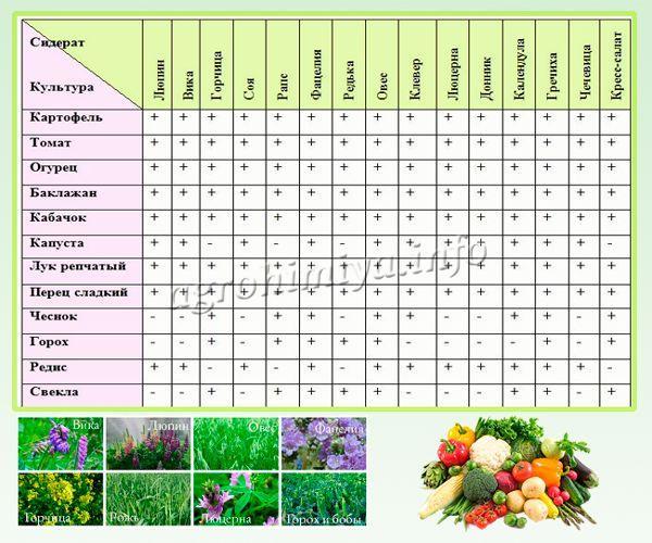 Сидераты для огорода. органическое, природное земледелие. | в сад! все в сад!